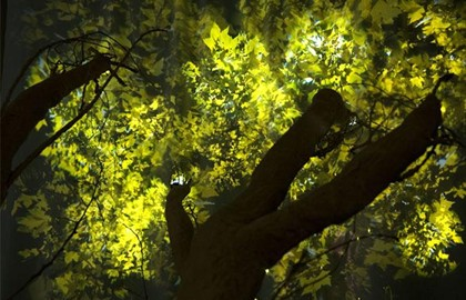 Photosynthetic-Rememberance